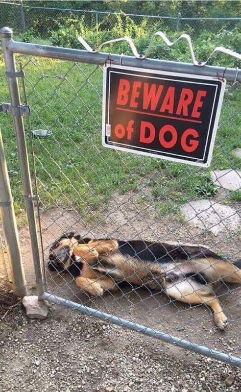 cute dogs behind beware signboard