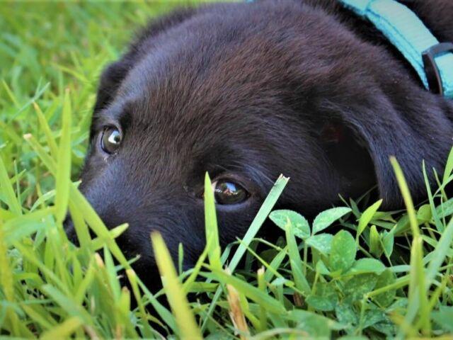 Blog - Prazuchi Dog Beds