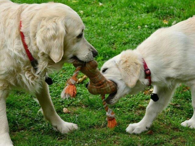 DIY Chew Toys