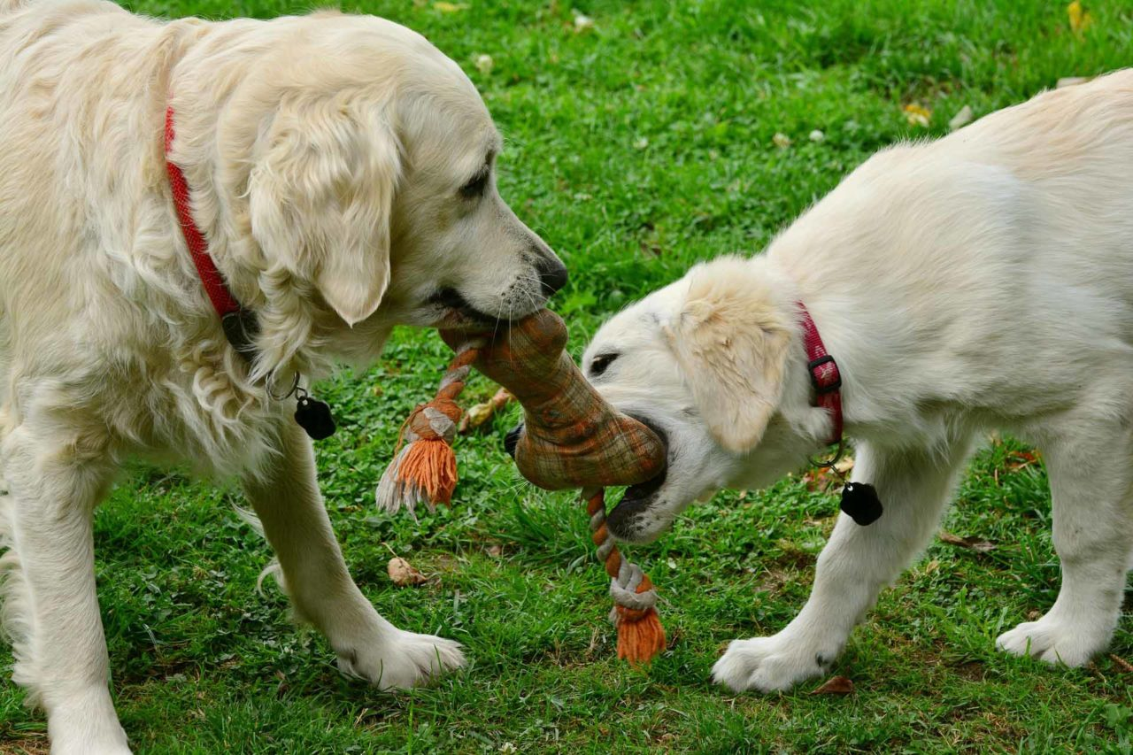 12 DIY Chew Toys You Can Make Today