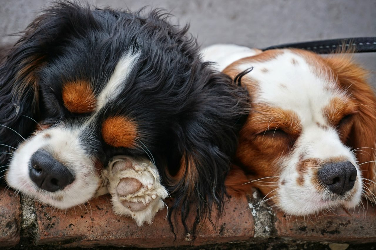 How to Deal with Hip Dysplasia in Dogs