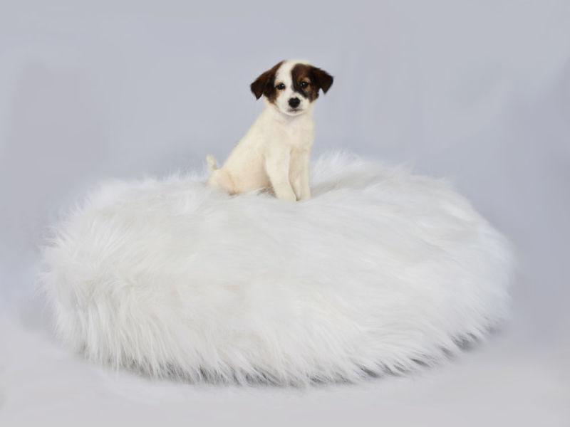 Fur Dog Bed White