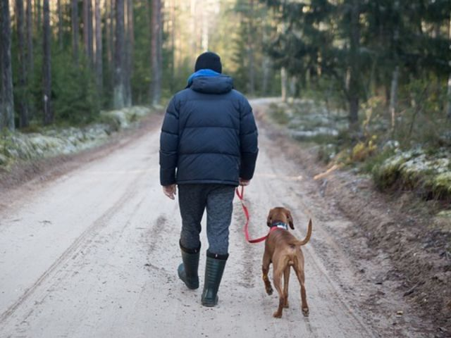 Travelling with pets - things you need